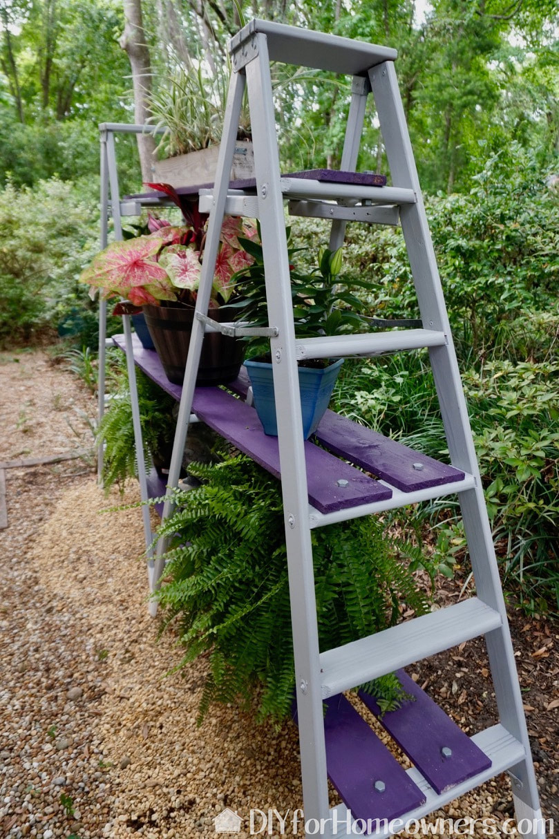 Pretty picture of the a-frame ladder shelf with all the plants in place.